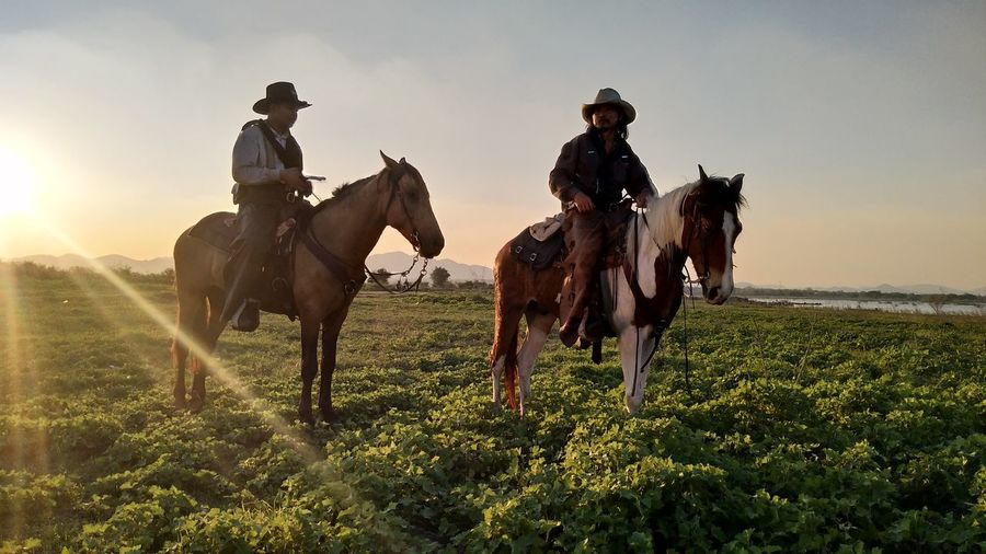 Rural Scene Wild West Men Cowboy Hat Horseback Riding Agriculture Field Riding Cowboy Togetherness Border Collie Ranch Running Flock Of Sheep Horse Racing Pony Tasmania Following Silhouette Saddle Paddock Panting Pasture Taurus Sprinting Marathon Men's Track Jockey Jogging Carrying In Mouth
