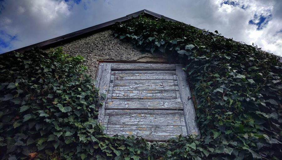 Low angle view of vine covered cottage