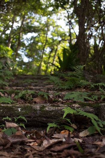 Aogashima Beauty In Nature Close-up Day Forest Freshness Green Color Green Color Growth Landscape Leaf Lush - Description Nature Nature Reserve No People Outdoors Plant Road Scenics Social Issues Tranquil Scene Tranquility Tree Vertical WoodLand