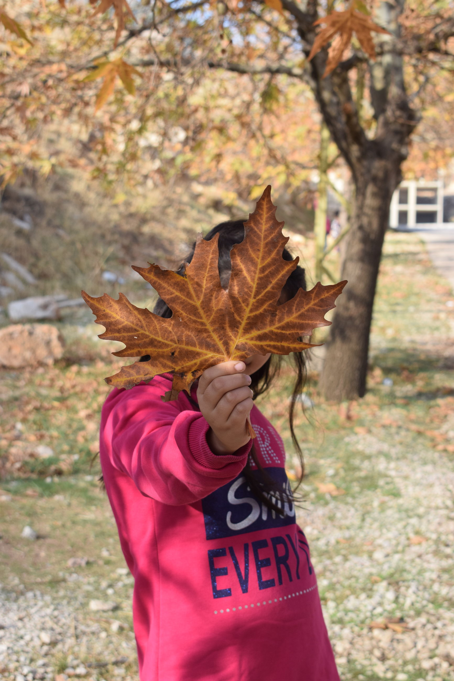 autumn, one person, leaf, change, real people, human hand, day, outdoors, nature, focus on foreground, maple leaf, tree, leisure activity, holding, lifestyles, human body part, beauty in nature, close-up, people