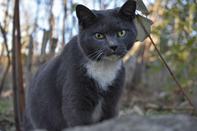Meow Animal