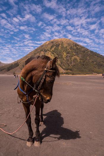 Horse cart on a desert