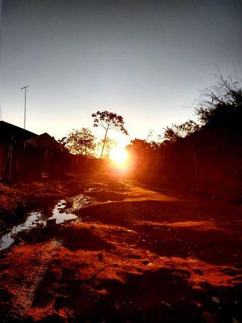 Aloado Sol. Tree Sunset Sunlight Silhouette Sun Sky Landscape