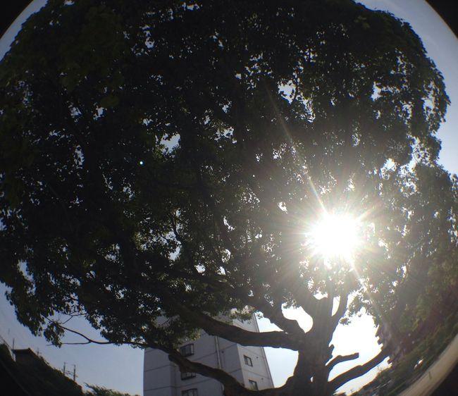 木洩れ陽 木漏れ日 太陽 木 樹 Sun Tree 太陽光 Sunshine