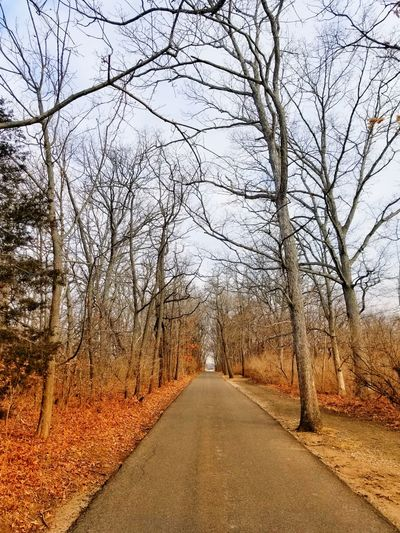 Winter Drive The Way Forward Bare Tree Tree Road Outdoors Nature Day No People Sky Scenics Beauty In Nature