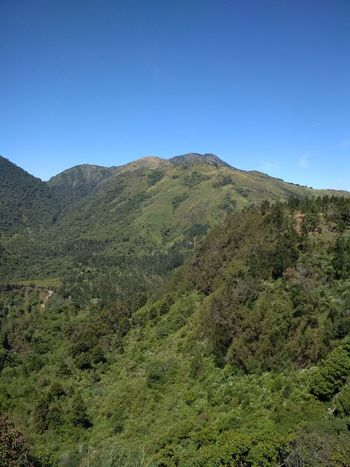 mountain lawu Tea Crop Tree Mountain Tree Area Forest Clear Sky Sky Landscape Green Color Tropical Tree Lush - Description Coconut Palm Tree Mountain Peak Valley Pine Woodland Palm Leaf Mountain Range Frond Tropical Climate Date Palm Tree Palm Tree Mountain Ridge Plateau Pine Tree Needle - Plant Part Snowcapped Mountain