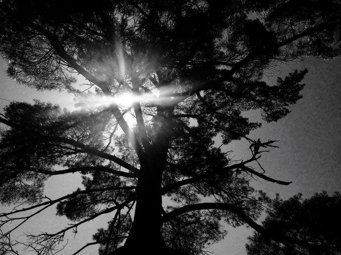 POV Of Dee Black & White Light Tree