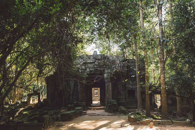 Siem Reap Cambodia Angkor Tree Plant Architecture Built Structure Nature Growth Day No People Building Forest Outdoors Building Exterior Sunlight History Entrance Land The Past Tree Trunk House Abandoned