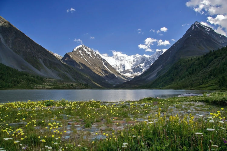Altaimoutains Altay Belukha Day Flower Lake Landscape Mountain Mountain Range Nature