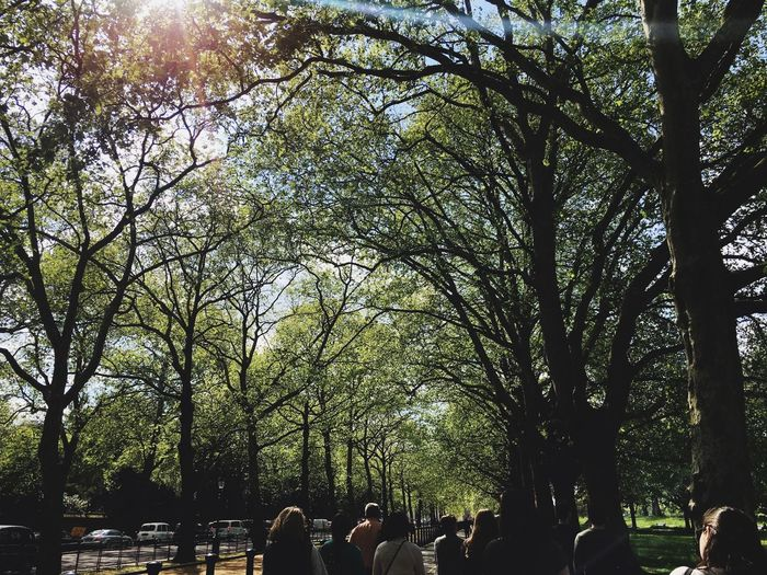 People by trees against sky