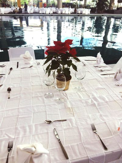 Nochebuena Plant Water High Angle View No People Outdoors Day Flower Nature Posada