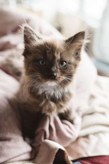 Close-Up Of Kitten Sitting On Bed At Home