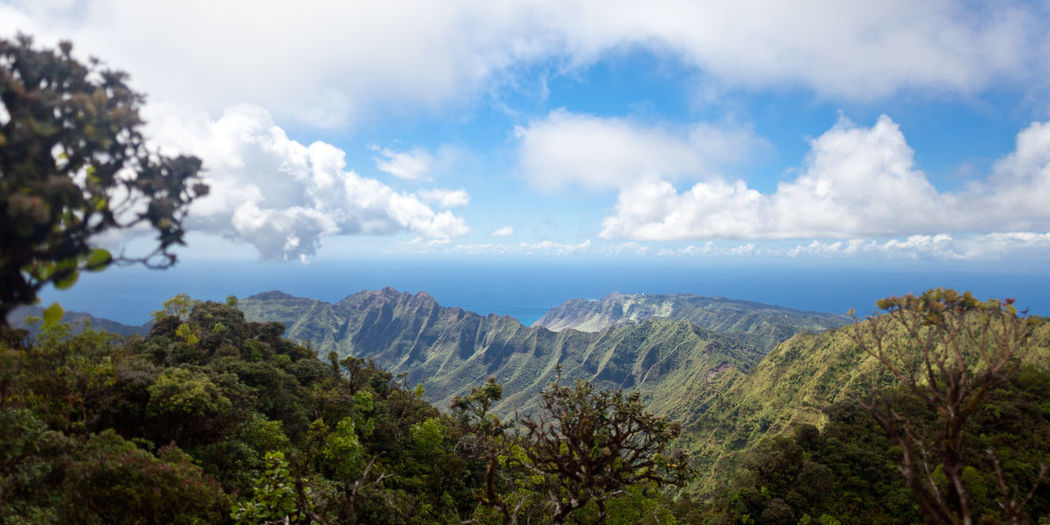 Views of Oahu island from Mount Ka'ala Backpacking Hawaii Hiking Oahu Rugged Beauty In Nature Cliff Cloud - Sky Environment Exploration Forest Highest Jagged Kaala Mountain Mountain Peak Mountain Range No People Outdoors Panoramic Peak Scenics - Nature Sky Tranquil Scene Tranquility
