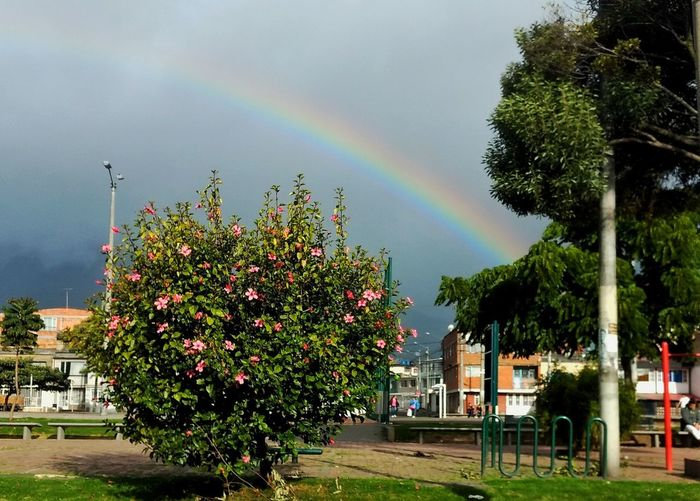Rainbow Double Rainbow Tree Multi Colored Outdoors Day No People Nature Beauty In Nature Sky Flower Street