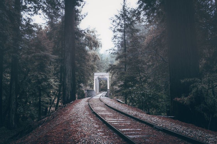Cold Temperature Day Forest Nature No People Outdoors Rail Transportation Snow Snowing The Way Forward Transportation Tree