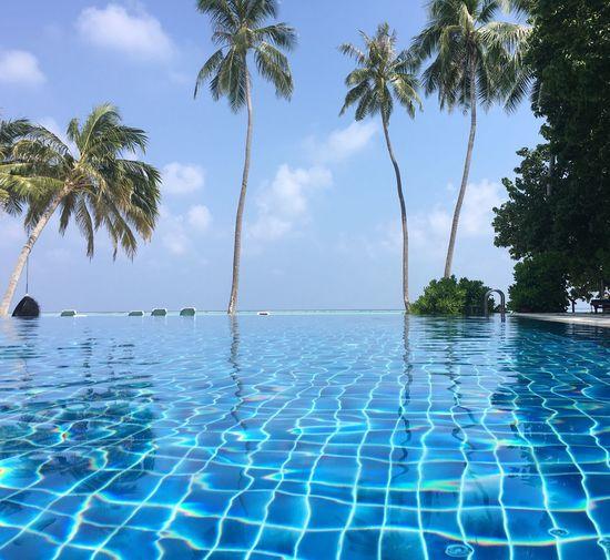 Maldives Palm Tree Water Sea Sky Tree Beauty In Nature Blue Nature Swimming Pool Scenics Horizon Over Water Tranquil Scene Idyllic Tranquility Luxury No People Cloud - Sky Tropical Climate Outdoors Infinity Pool Meeru Island Meerufenfushi Meeru Miles Away Miles Away