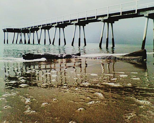 Driftwood Pier