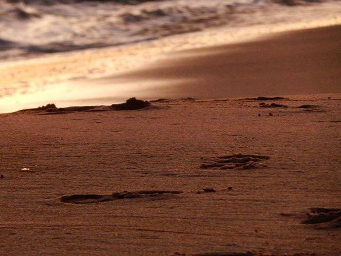 """I've still got sand in my shoes..."" 🎶🎶 Sand Coast Shore Sunset Ocean Bytheocean Maldonado Uruguay Uruguaynatural Nature H2o_natura Audiovisualuruguay Uruguay_estrella Uruguay_pais Igers_gallery Igersuruguay Igerspostales Summer Beach Peace Beauty Photo Photographeramateur Amateurphotography Photograpy"