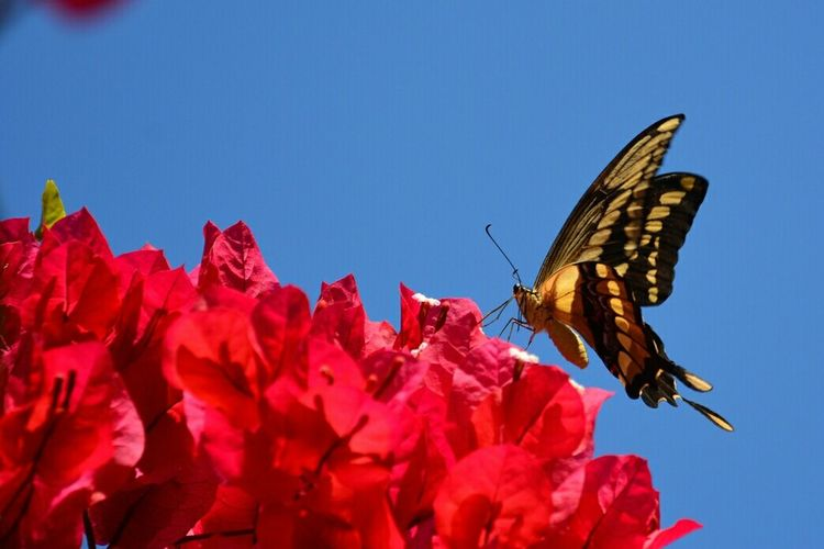 Butterflies Garden Photography Insect_perfection Tadaa Community