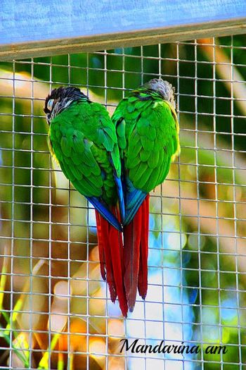 Figuras en la Naturaleza Valencia, Spain Valencia Zoo Love Heart