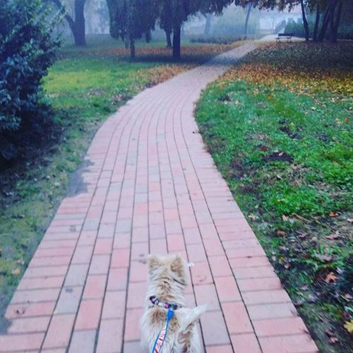 Walk with my little darling. Bubu Westie Westiegram Dog autumn doboz wenckheimpark colorful
