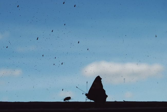 Rendezvous Animal Wildlife Blue Butterflies Butterfly Cloud Fly Friends House Fly Insects  No People Odd Couple Rendezvous Scenics Silhouette Silhouettes Sky Windowsill
