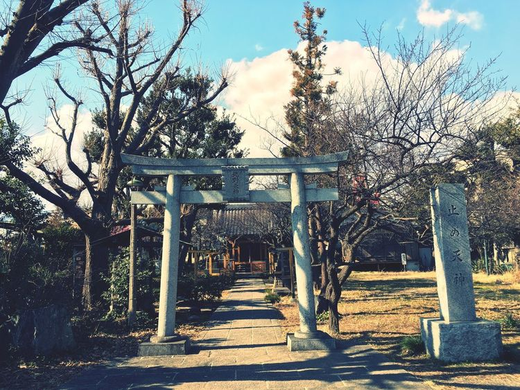 Peace GoodTimes Japan Cycling A Shrine Tree Day Outdoors Sunlight Bare Tree Sky EyeEmNewHere