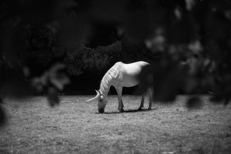 Fantasy Horse Set Life Shooting Unicorn White Horse