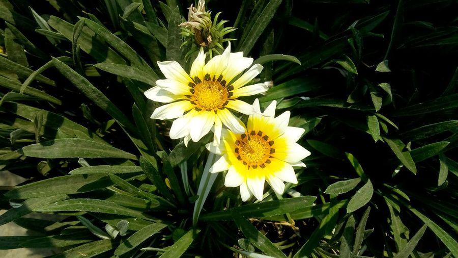 NO DSLR NEEDED JUST A 8 MP CAMERA f 2.4 First Eyeem Photo Flower Hd Flower