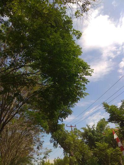 Tree sky Tree