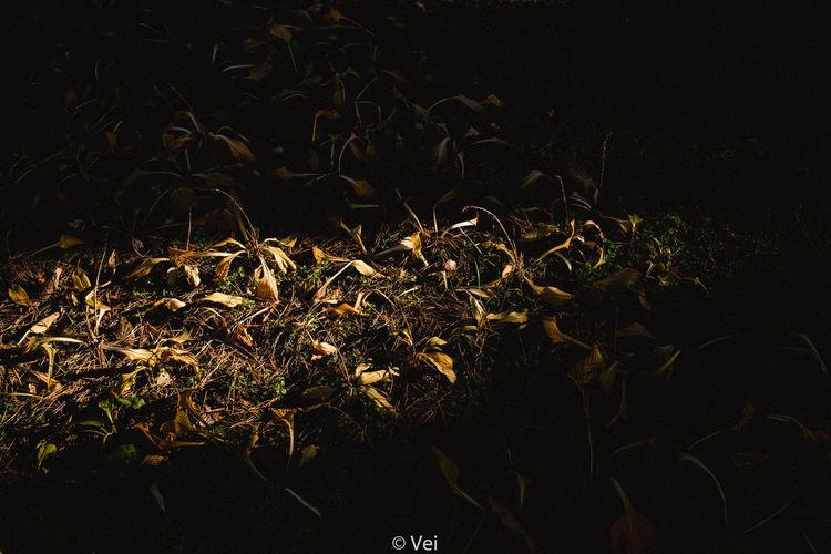 秋 Night Illuminated No People Arts Culture And Entertainment Outdoors Close-up Sky