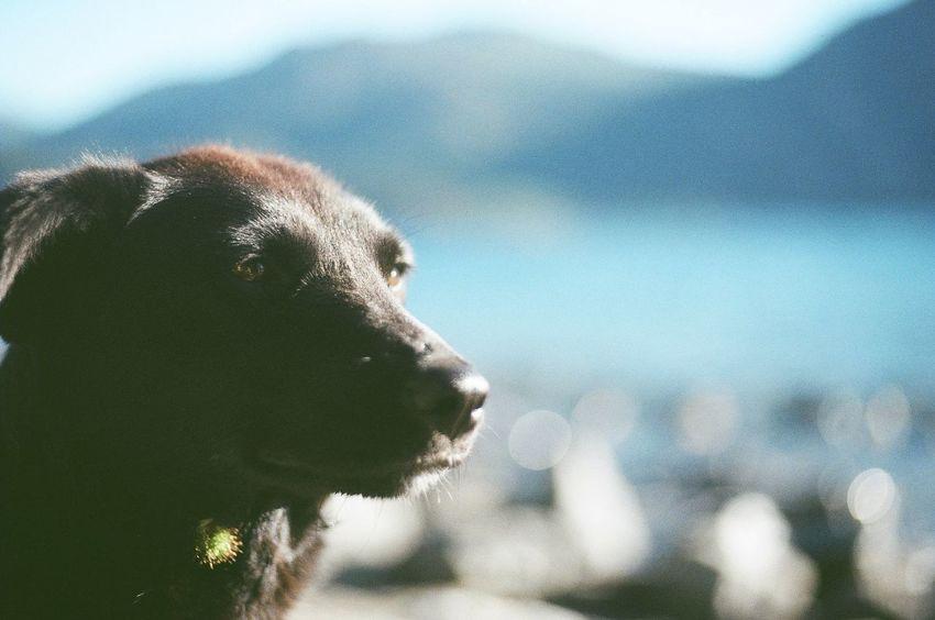 analógicas del sur Lagos Dog Sur Argentino San Martin De Los Andes Water Sky Close-up