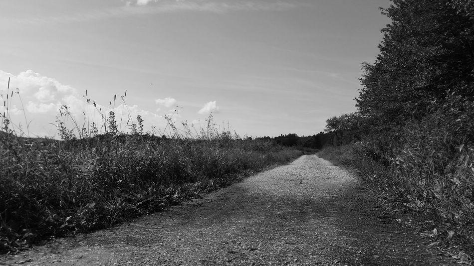 Hiking July Blackandwhite EyeEm Nature Lover Trails