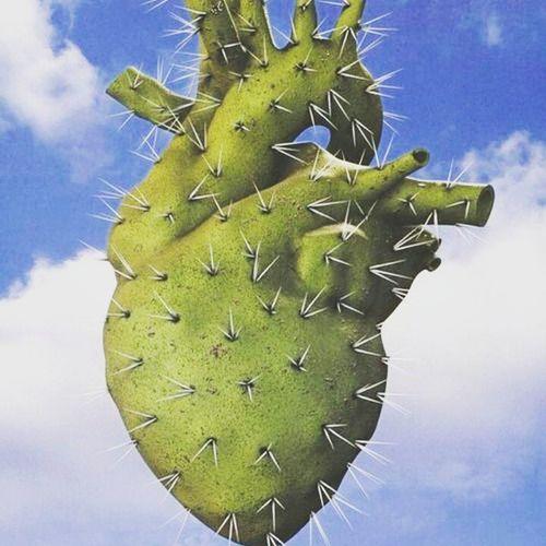 Cactusturkey Cactus Antalya Maniac Kaktüs aşk