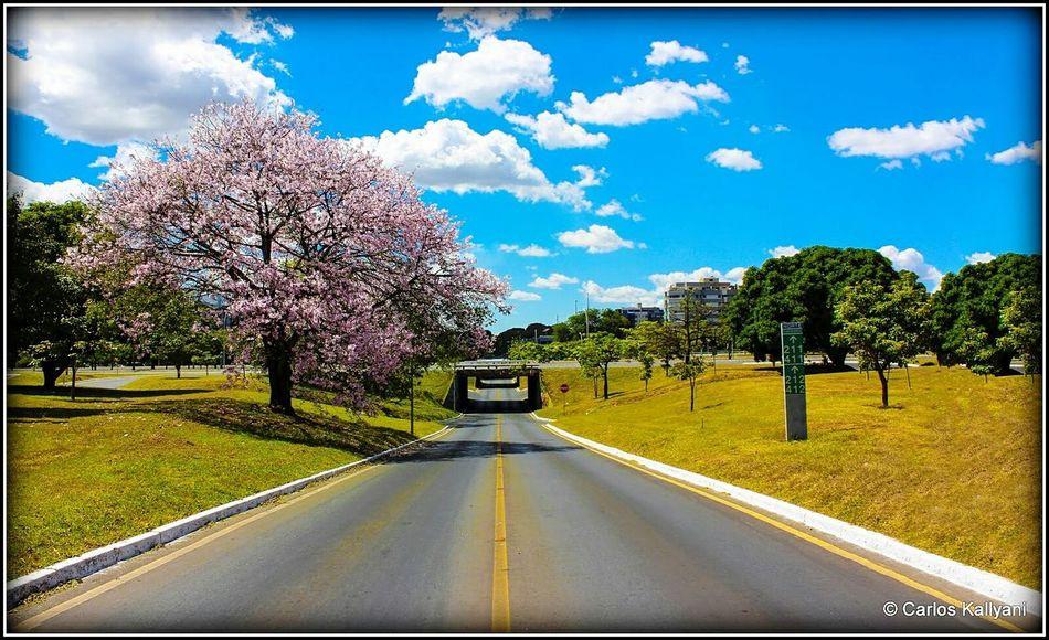 Florada Tree Road The Way Forward Landscape Sky No People Cloud - Sky Flower Grass Fotoartegram Brasília Brasília Minha♥ Fotografia Photo Gavião Photography Fotografia Photo Foto Fotoshooting Tree Florida