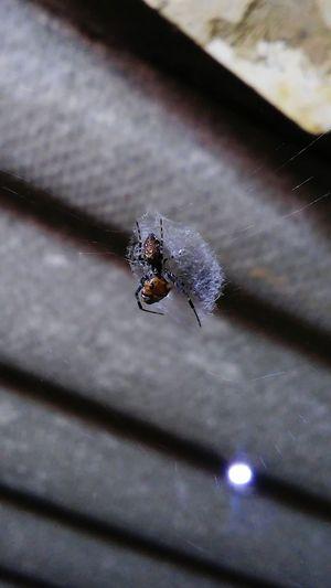 Spiders Bugs Showcasedecember Macro_collection No People Closeupshot Taking Photos Unique!  Urban