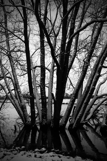 Riverside Architecture Bare Tree Beauty In Nature Branch Cold Temperature Day Forest Land Nature No People Outdoors Plant River Snow Tranquility Tree Tree Trunk Trunk Winter WoodLand