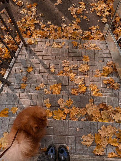 High angle view of cat on autumn leaves