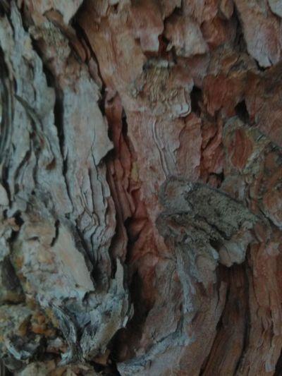 Tree Trees Wood