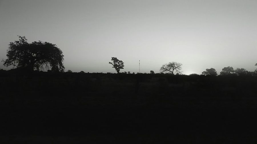 Took this with my S5 a while ago... Silhouette Tree No People Outdoors Nature Faces Of Africa Day Life Is Beautiful South Africa Faces Of EyeEm Art Is Everywhere Change Your Perspective Summer Forest Adventure Forest Beauty In Nature