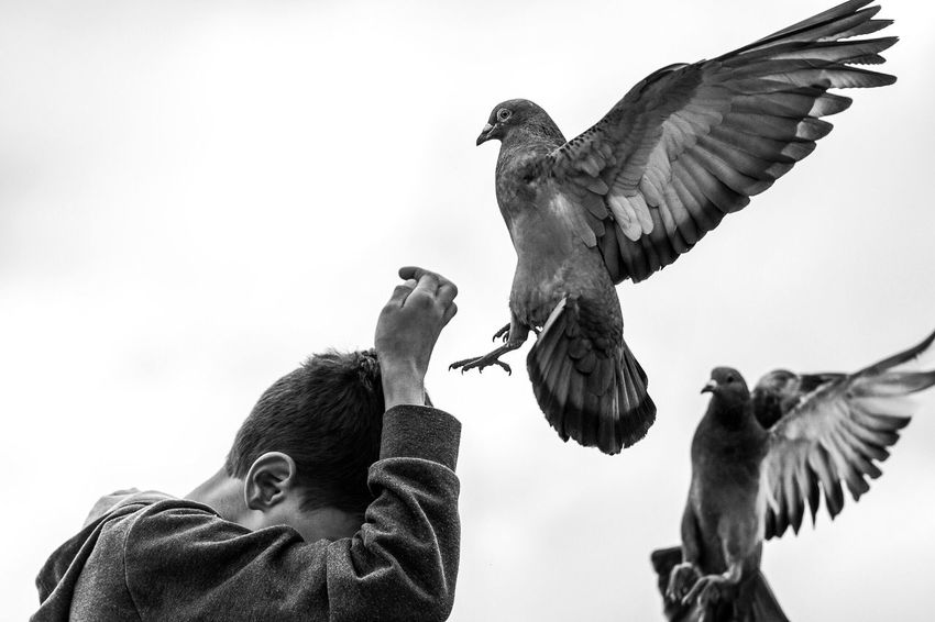 Hungry pigeons Bird Animal Themes Spread Wings Animal Wildlife Low Angle View Animals In The Wild Flying Outdoors Nature Day Clear Sky Togetherness Bird Of Prey Real People Sky Pigeon This Week On Eyeem Postcode Postcards Black And White Friday