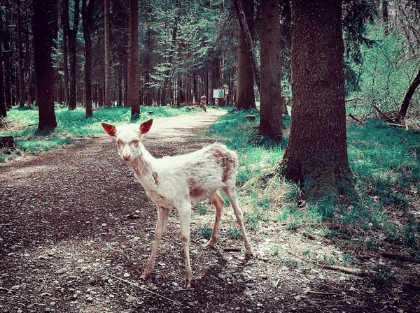 Reh Deer Zombie Animal Themes Nature No People Animals In The Wild Outdoors The Great Outdoors - 2017 EyeEm Awards