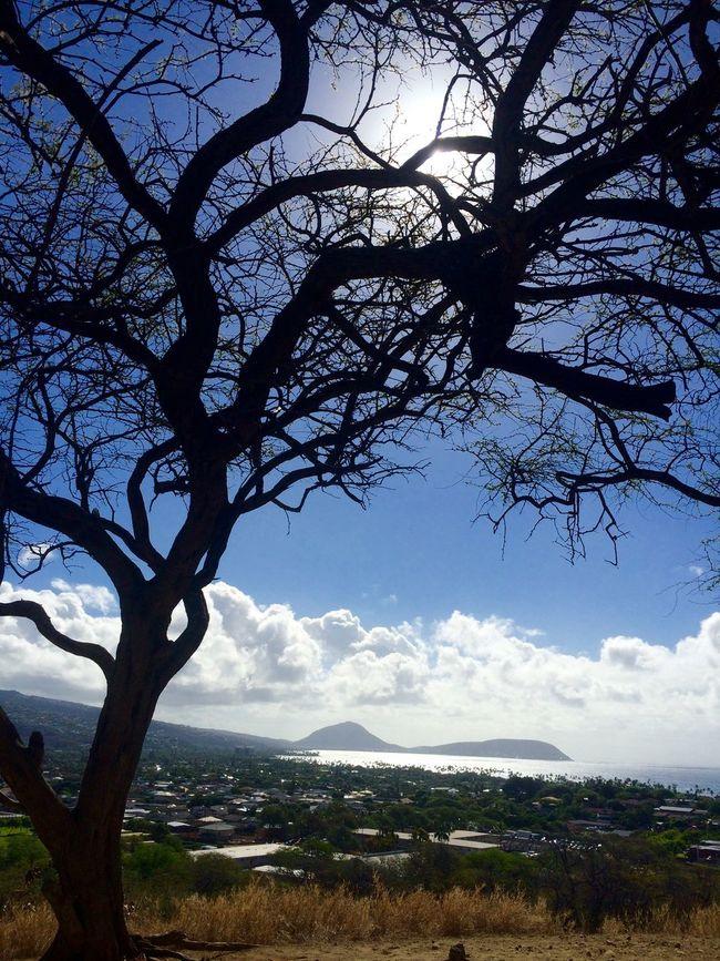 Honolulu  Crater Hawaii Trees Vulcano AMPt Community