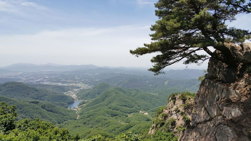 Tree Nature Mountain Landscape Day No People Outdoors Plant Beauty In Nature Sky Scenics Beauty In Nature Mountain Peak Top Of The Mountain