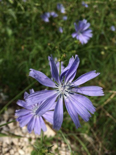 Fiore Viola Fiore Viola Flower Violet Violet Flower