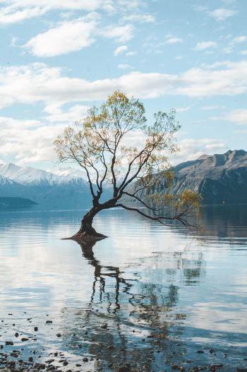 That Wanaka Tree. Nikon New Zealand Landscape Landscape Photography Nikonphotography NikonD5000 Water Tree Sky Cloud - Sky Plant Beauty In Nature Tranquility Scenics - Nature Nature Reflection No People Tranquil Scene Lake