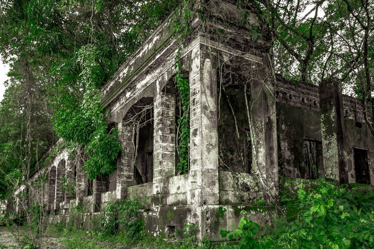 Ruins Of An Old Prison Black&Green #NSFM Abandoned Amazon Architecture Building Exterior Built Structure Day Green Color History Nature No People Old Ruin Outdoors Paricatuba Plant Pretty Tree