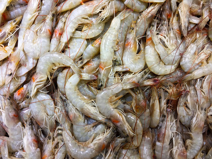 Shrimp Shrimping Shrimps Abundance Backgrounds Fish Market Fishing Industry Food Food And Drink For Sale Freshness Full Frame Healthy Eating Iran Large Group Of Objects Market Stall Raw Food Raw Shrimp Raw Shrimps Sea Animal Seafood Shrimp - Seafood Shrimp! Tehran Wellbeing