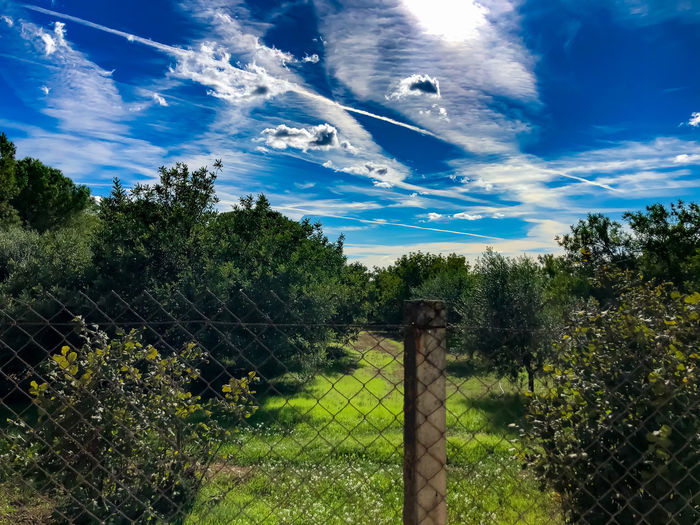 Trees growing by fence against sky