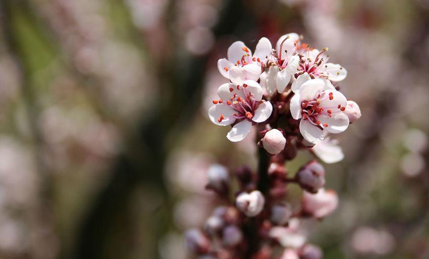 Marion/Flower White Flower Spring